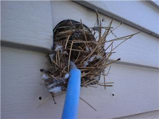 bird nest in dryer duct